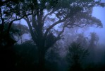 Dawn mist in the rain forest canopy.
