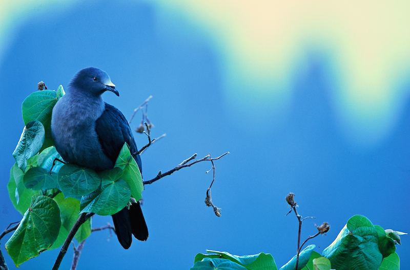 This image is the 1st place winner for the Endangered category in The World's Rarest Birds photo contest.