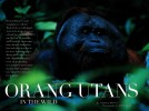-- See the Orangutans in the Wild gallery under the PHOTO GALLERIES menu.