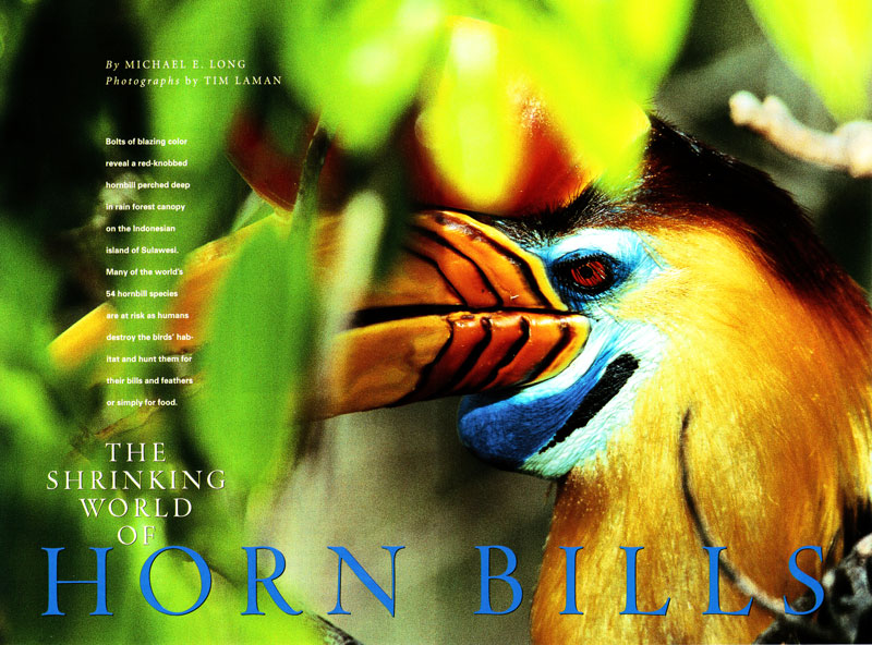 -- See the Hornbills gallery in the PHOTO GALLERIES menu.