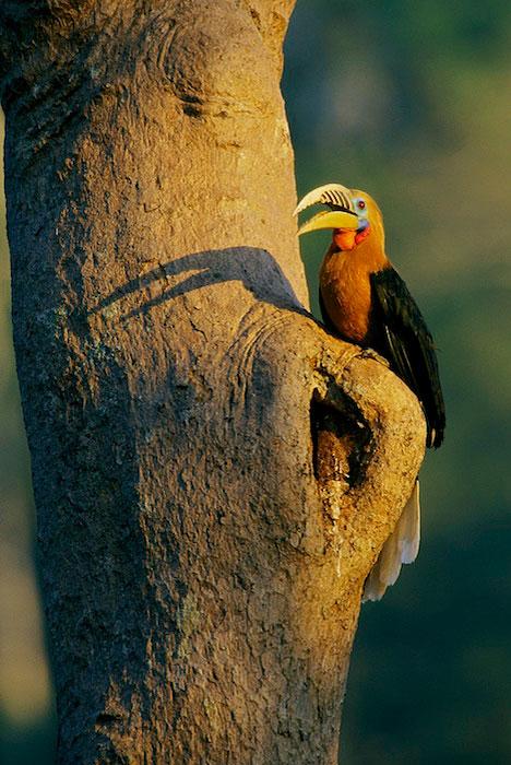 2002 Wildlife Photographer of the YearRunner up - Endangered Species