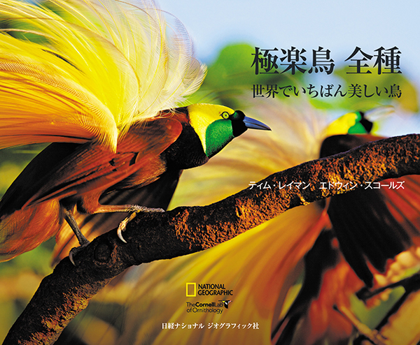 Tim's book has been translated into Japanese.  One great addition to this book is it contains QR codes that take you directly to videos of the birds.  The Japanese edition is available for purchase in bookstores in Japan or you can order it from the Nat Geo Japan website.