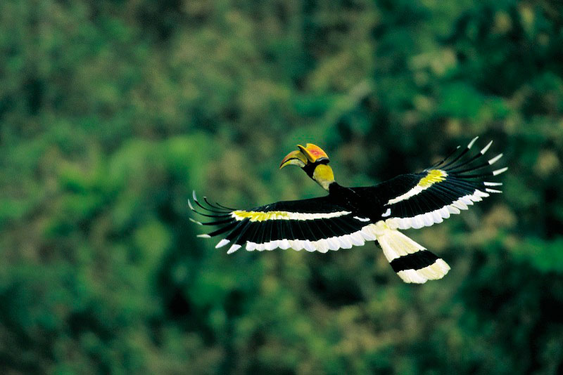 Great Hornbill scraps Great Hornbill graphics Great Hornbill images Great Hornbill pics Great Hornbill photos Great Hornbill greetings Great Hornbill ecards Great Hornbill wishes Great Hornbill animations