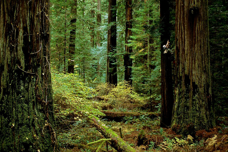 Humbolt Redwoods, California