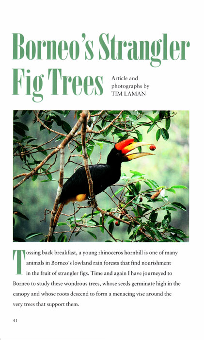 -- This is Tim's first National Geographic Article.  He wrote and photographed this story on trees he had been studying for years.