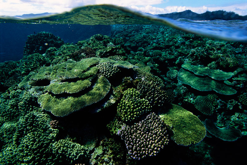 Hard corals on the reef top