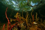 The view from below - under the mangroves.  This habitat is an important nursery area and provides shelter for many fish species.