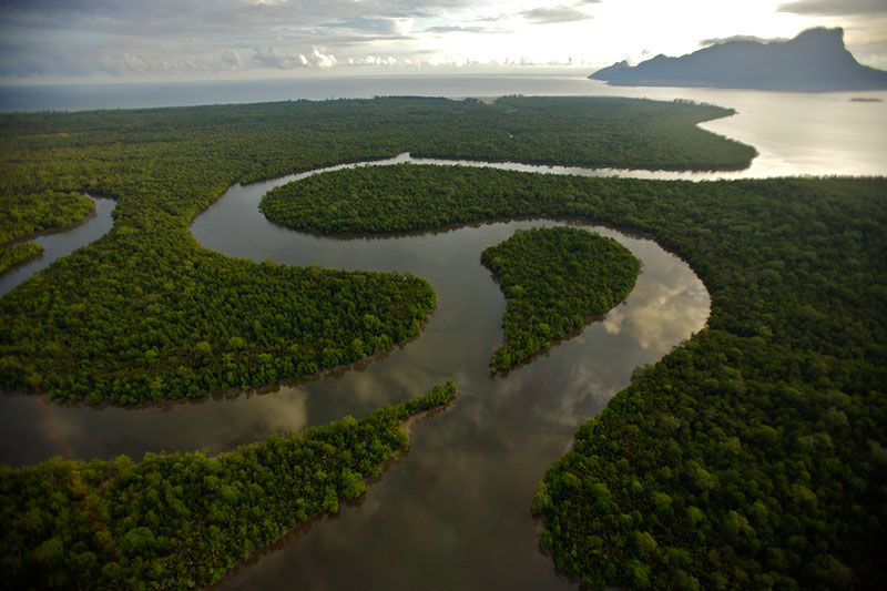 Aerial view of river and mangrove forest in the Sarawak Mangrove Reserve.