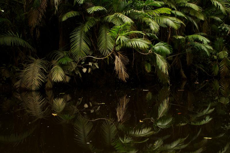 Anangu creek, Yasuni National Park, Orellana Province, Ecuador.