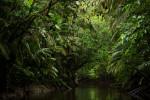 Trees hanging over Anangu creek, Yasuni National Park, Orellana Province, Ecuador.