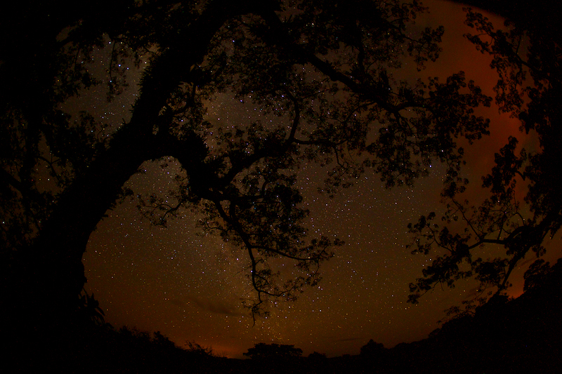 Night sky from the canopy tower at the Tiputini Biodiversity Station, Orellana Province, Ecuador. The orange light is from gas flares in Yasuni National Park.