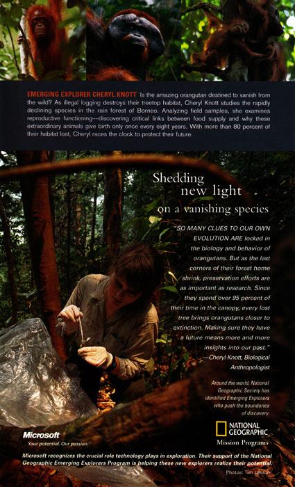 National Geographic Emerging Explorer Cheryl Knott (Tim Laman's wife) conducts orangutan research in Borneo.