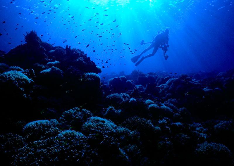 Apo Reef, Philippines