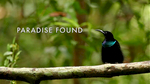 Paradise Found was a finalist in the 2013 Telluride Mountain Film.  This short film was produced by The Cornell Lab of Ornithology for the Birds of Paradise museum exhibit by National Geographic.