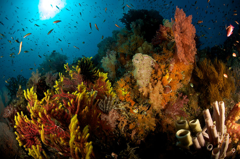 Soft corals, sea fans and sponges flourish on this healthy reef near Fiabacet Island.