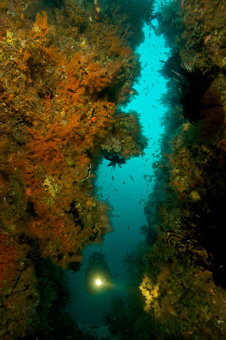 Diving guide Graham Abbott explores an underwater rock wall for unique marine life at the Pisang Islands.