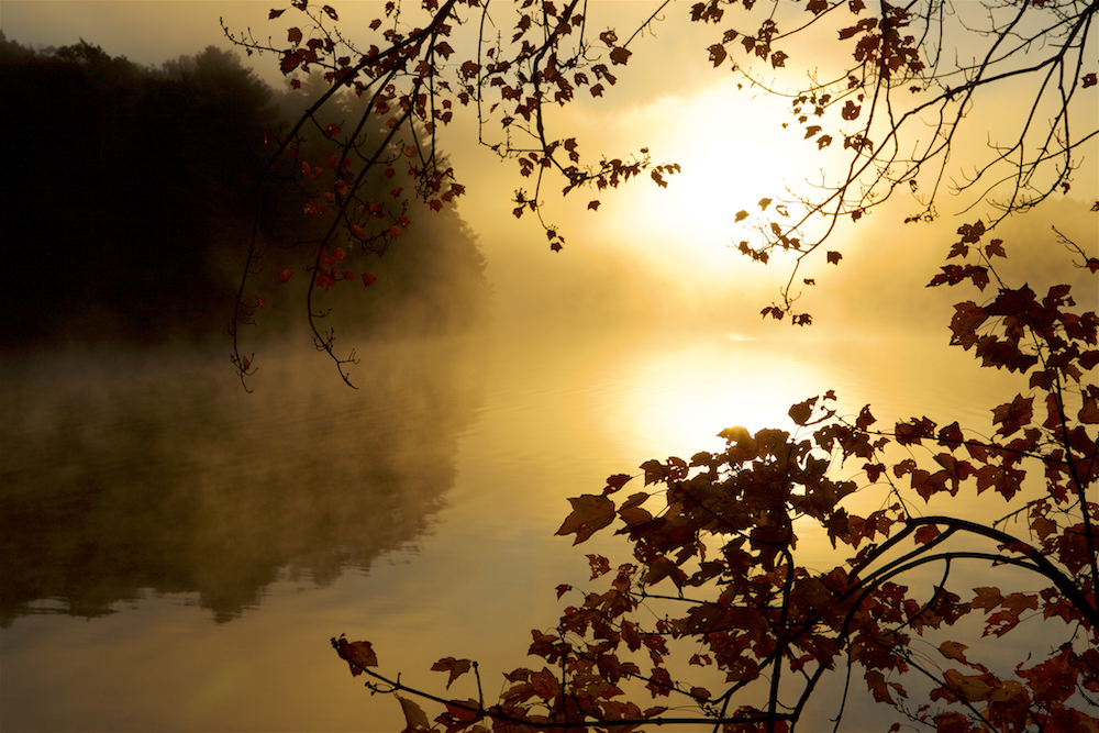 The sun rises through the mist over Walden Pond, viewed from Thoreau cove.Aluminum prints start at 24{quote}.  Please contact Office@TimLaman.com to order.