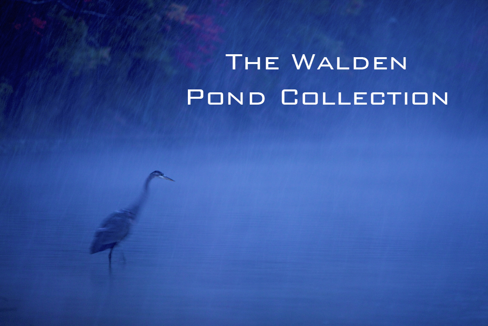 Below are the 16 images chosen for The Walden Pond Collection of fine art prints.  All 16 images are available to purchase on recycled aluminum through the office.Scroll down to see the signed aluminum prints and images available.