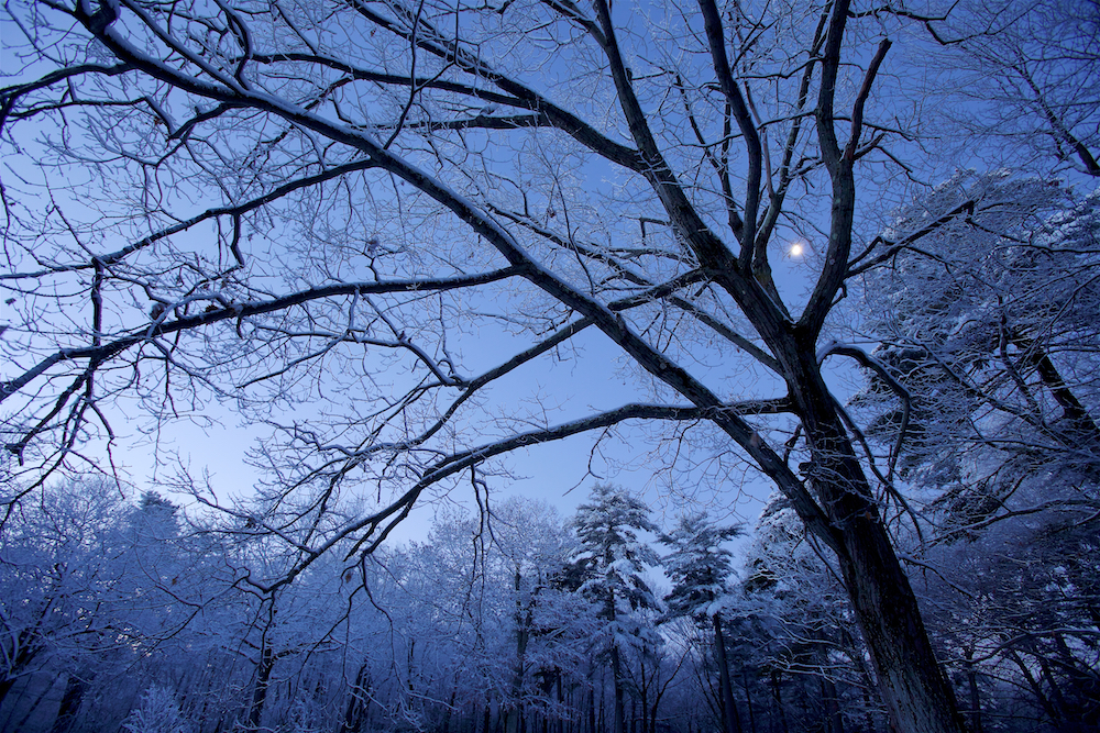 Before sunrise on a winter morning, the moon shines through the snow-covered trees next to Walden Pond.Aluminum prints start at 24{quote}.  Please contact Office@TimLaman.com to order.