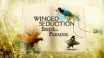 Tim and Ed Scholes are featured in this 1 hour show that was produced for the National Geographic Channel.  It shows their journey to capture all 39 species of Birds-of-Paradise.  Tim's video and still photographs are used in the film.