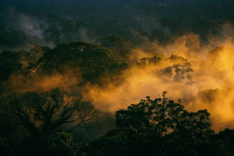 Golden rays from sunset illuminate mist in the rain forest canopy of Borneo Island.