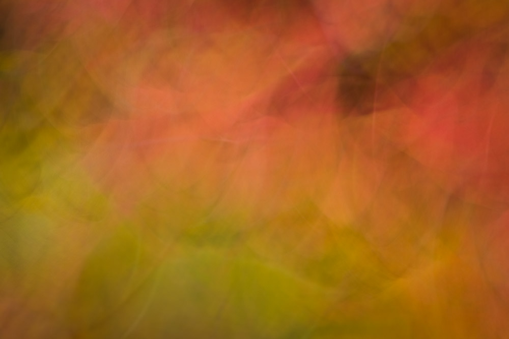 Fall color motion blur in Whiteside Cove near Highlands, North Carolina