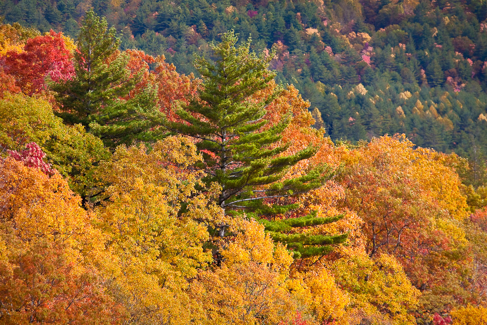Fall colors from Blue Valley Overlook in Nantahala National Forest