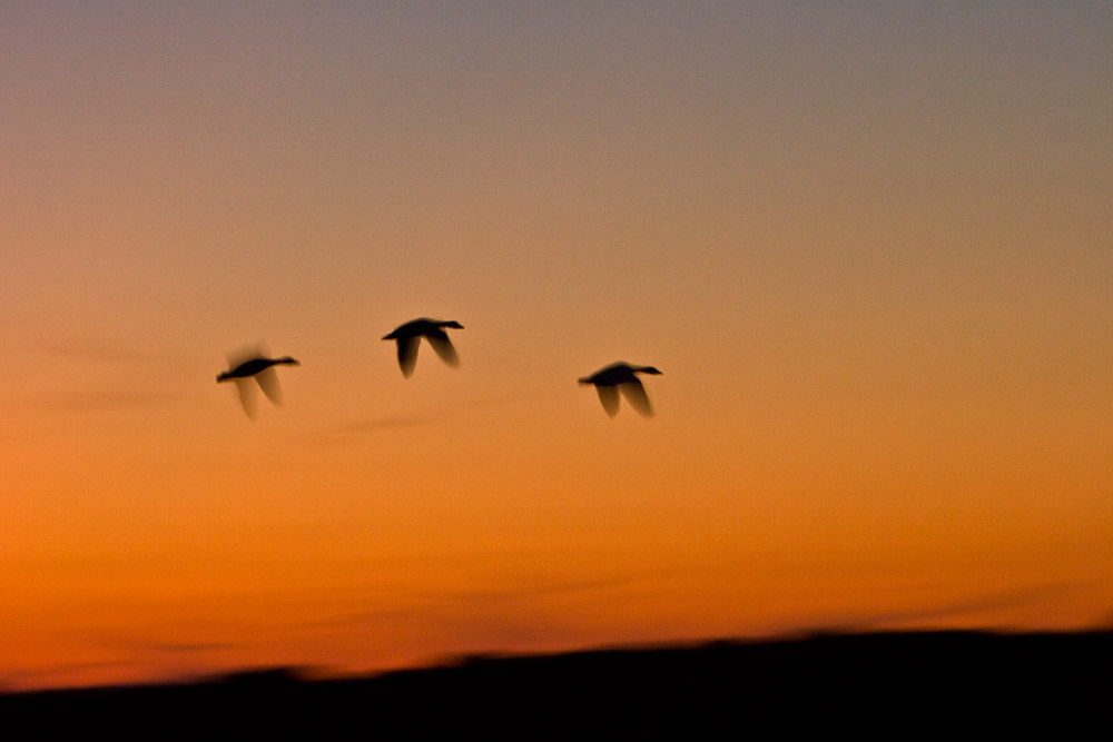 Sunset at the Snow Geese Pool, Chincoteague Island National Wildlife Refuge, Assateague Island, Virginia