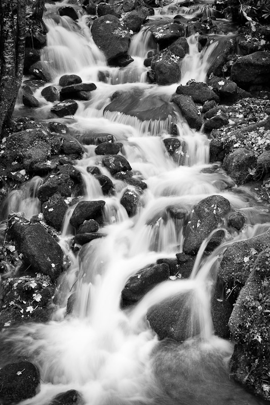 Rain-swollen creek, Great Smoky Mountains National Park, North Carolina