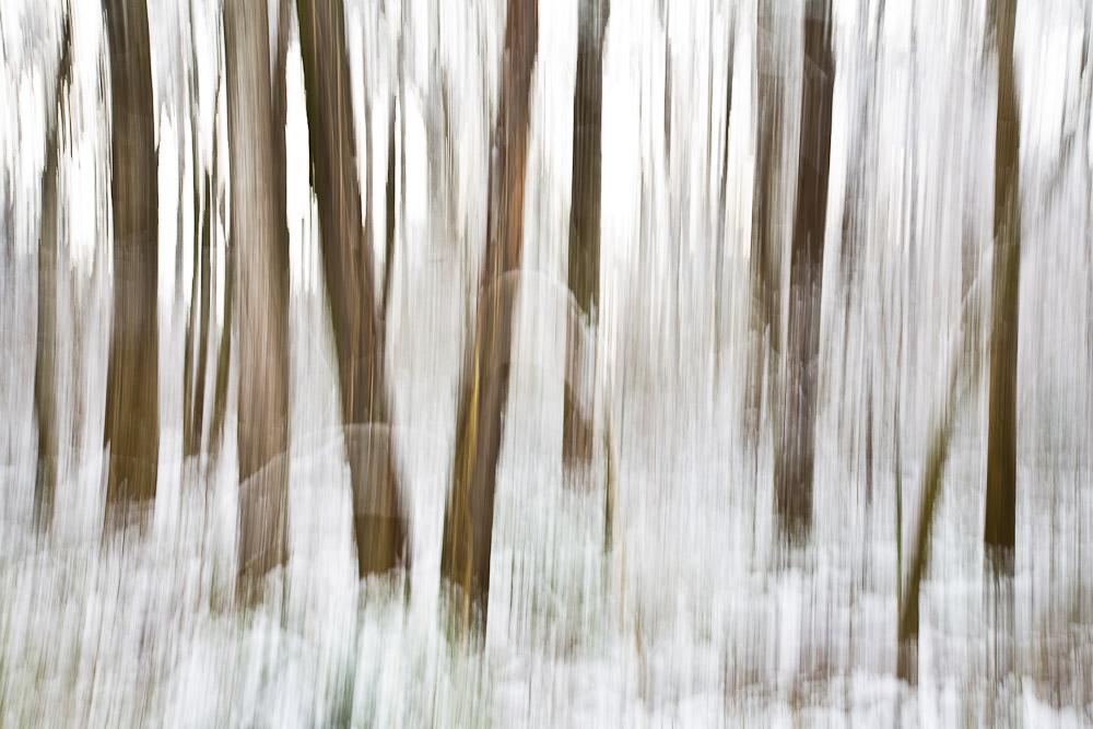 Snowfall on the Torrence Creek Greenway in Huntersville North Carolina