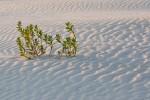 Sand Dunes - Shell Island, Wrightsville Beach, NC