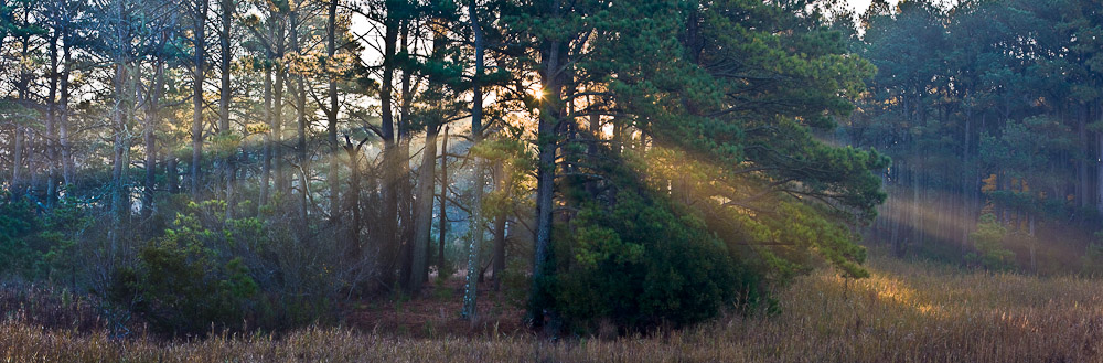 Sunbeams in the morning fog at Chincoteague Island National Wildlife Refuge, Assateague Island, Virginia