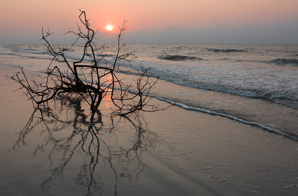 Tree on Beach at Sunrise, Hilton Head Island SC