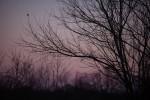 Winter twilight, Torrence Creek Greenway, Huntersville, NC