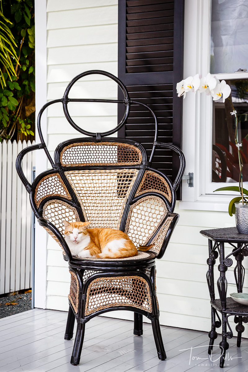 The Queen and her Throne.  Key West, Florida