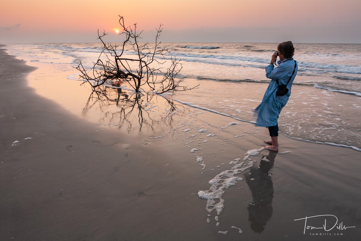 Driftwood Tree on the Beach at sunrise, Hilton Head Island, SC