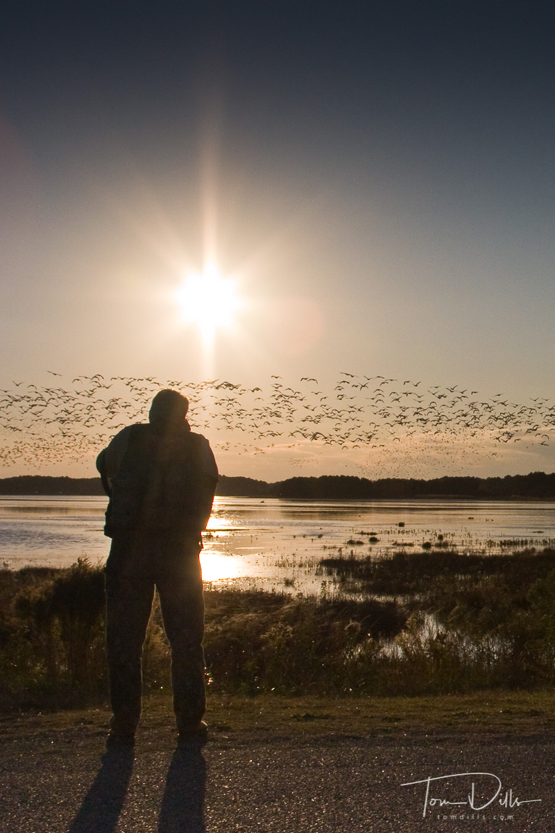 Edgar Payne almost misses the Snow Geese blast-off because he was in his car getting the GPS coordinates for the restaurant for that night's dinner!