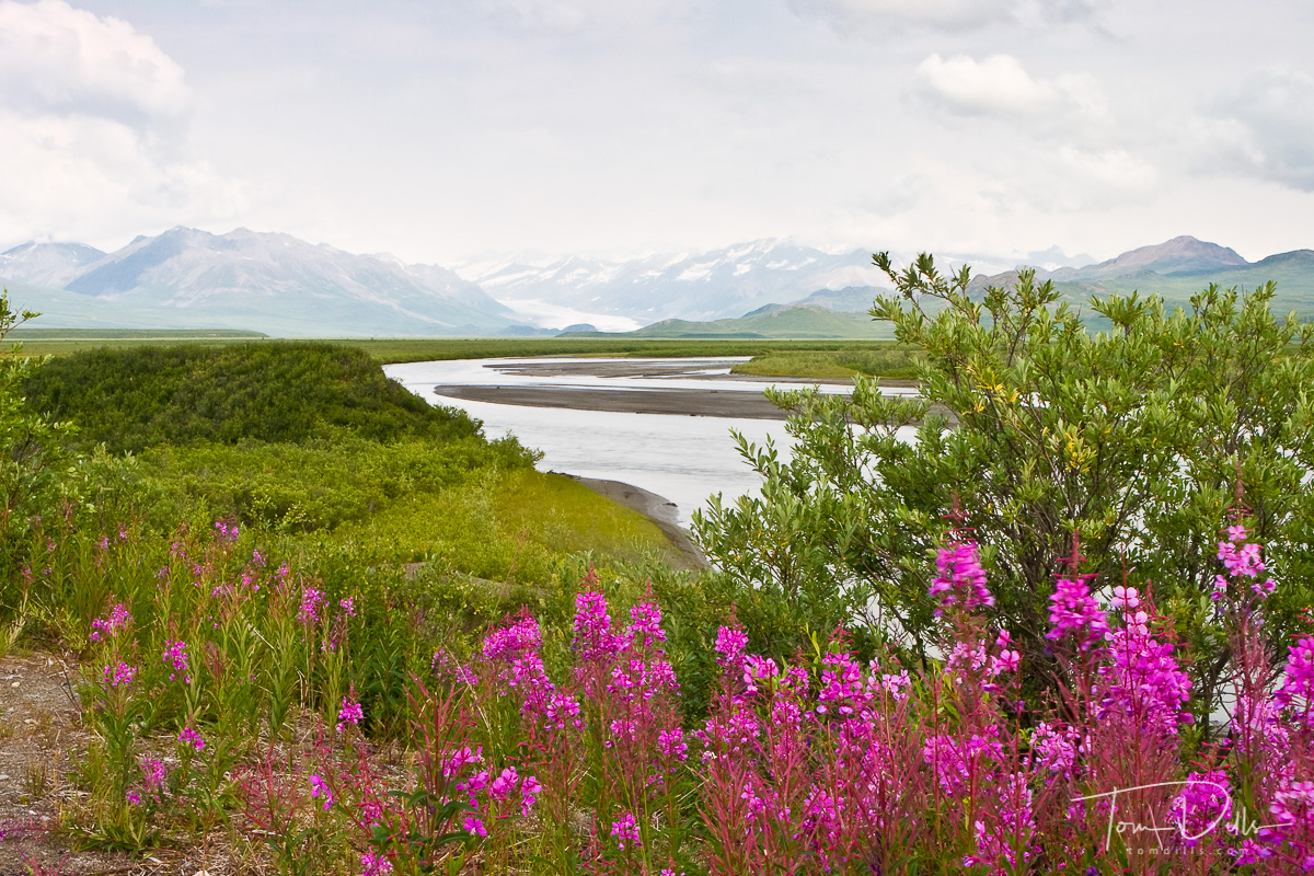 MacLaren River and MacLaren Glacier, MacLaren River Lodge, Denali Highway, 40 miles from Paxson, Alaska