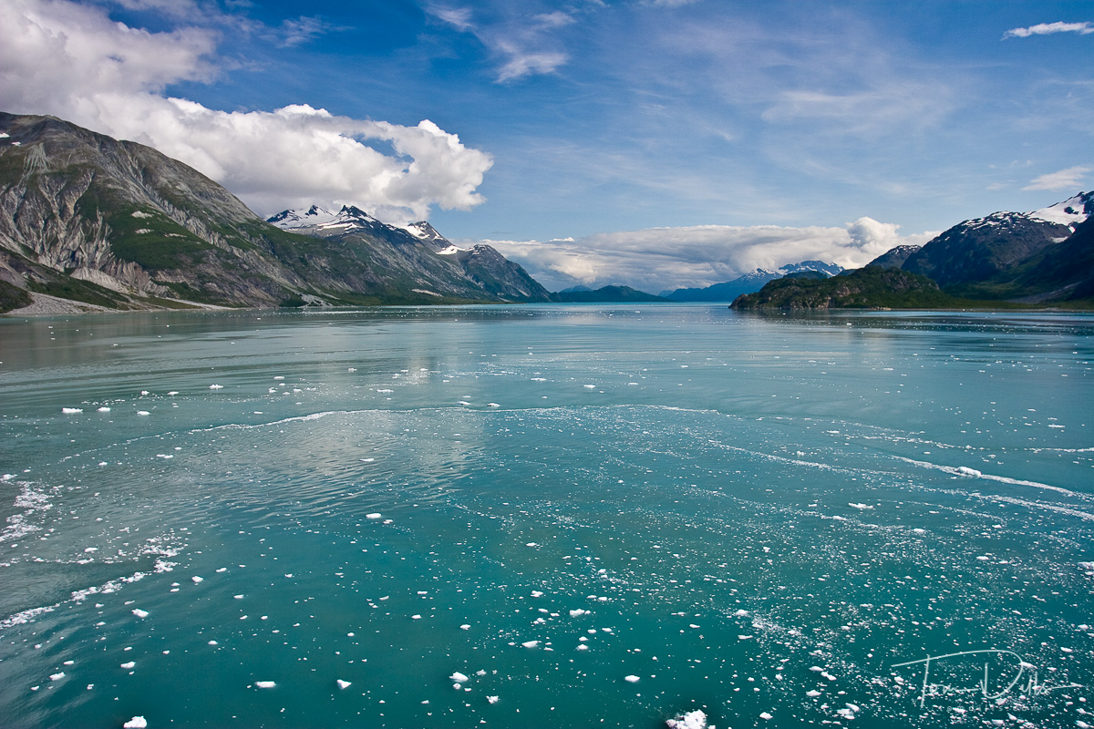 Ice floating on the water, Glacier Bay National Park and Preserve, Alaska