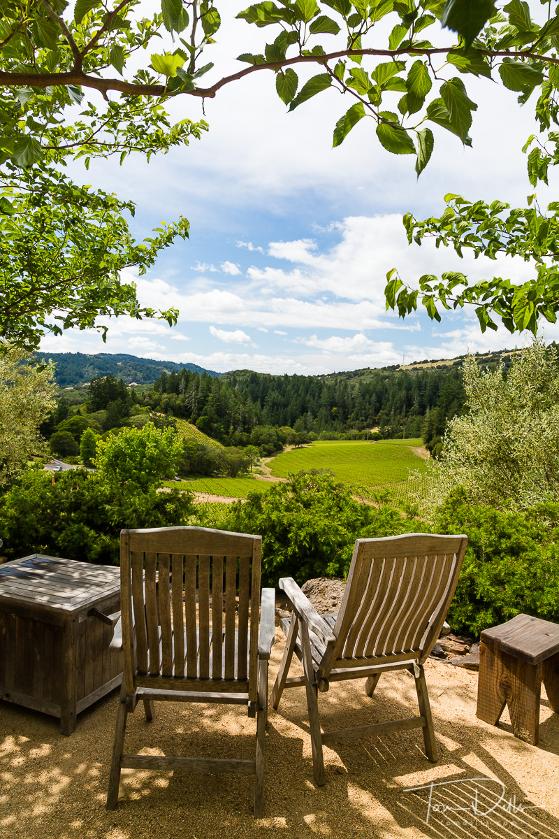 View from Fisher Vineyards near Santa Rosa, California