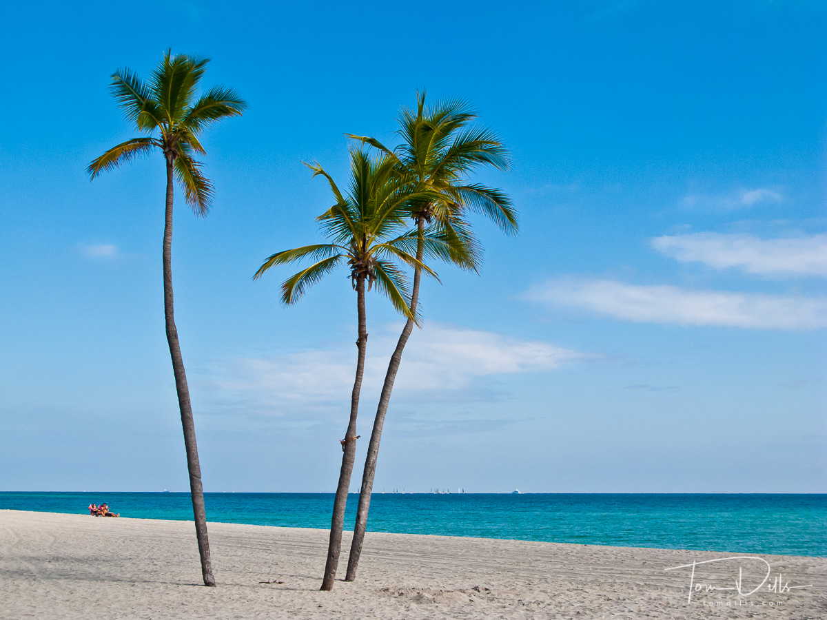 Palm trees on Hollywood Beach Florida prior to our Celebrity Solstice cruise