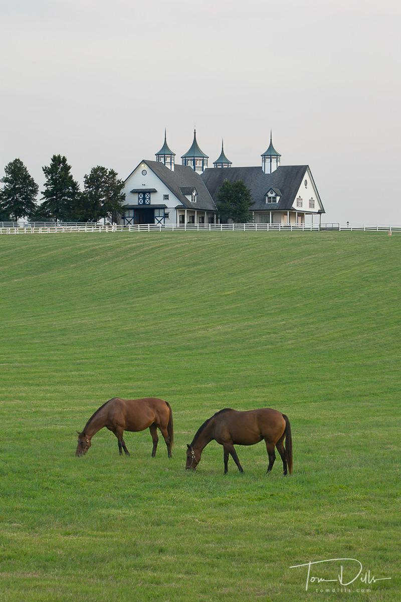 Barn and horses near Lexington Kentucky