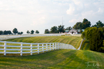 Calumet Farm, Lexington KY