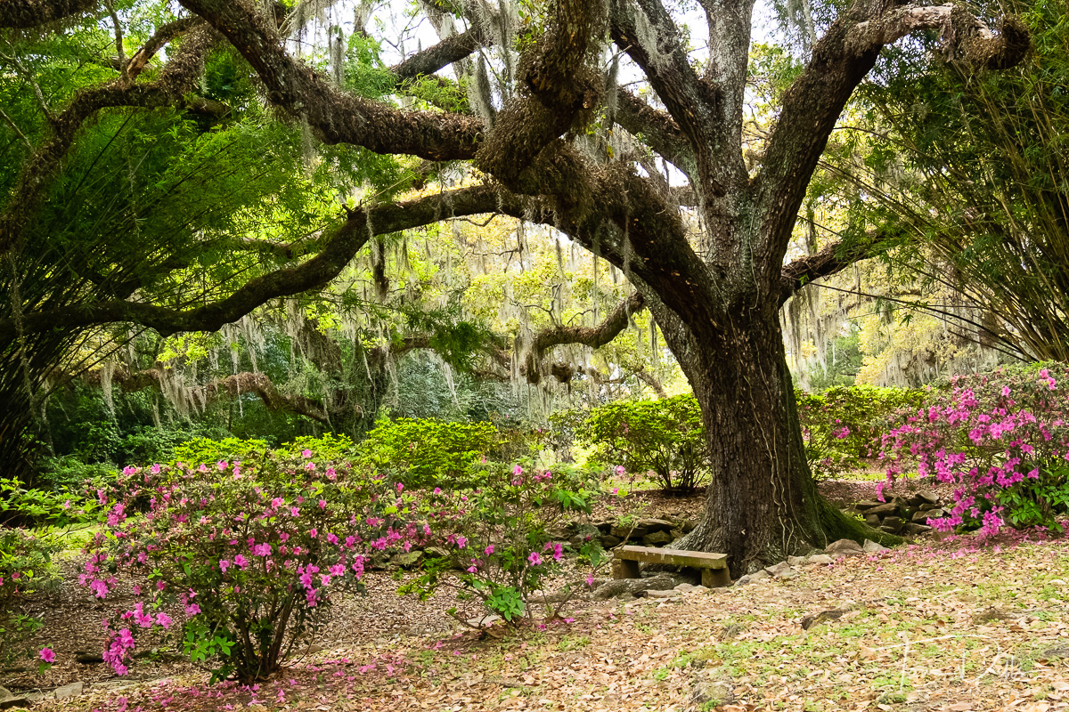 Jungle Gardens in Avery Island, Louisiana