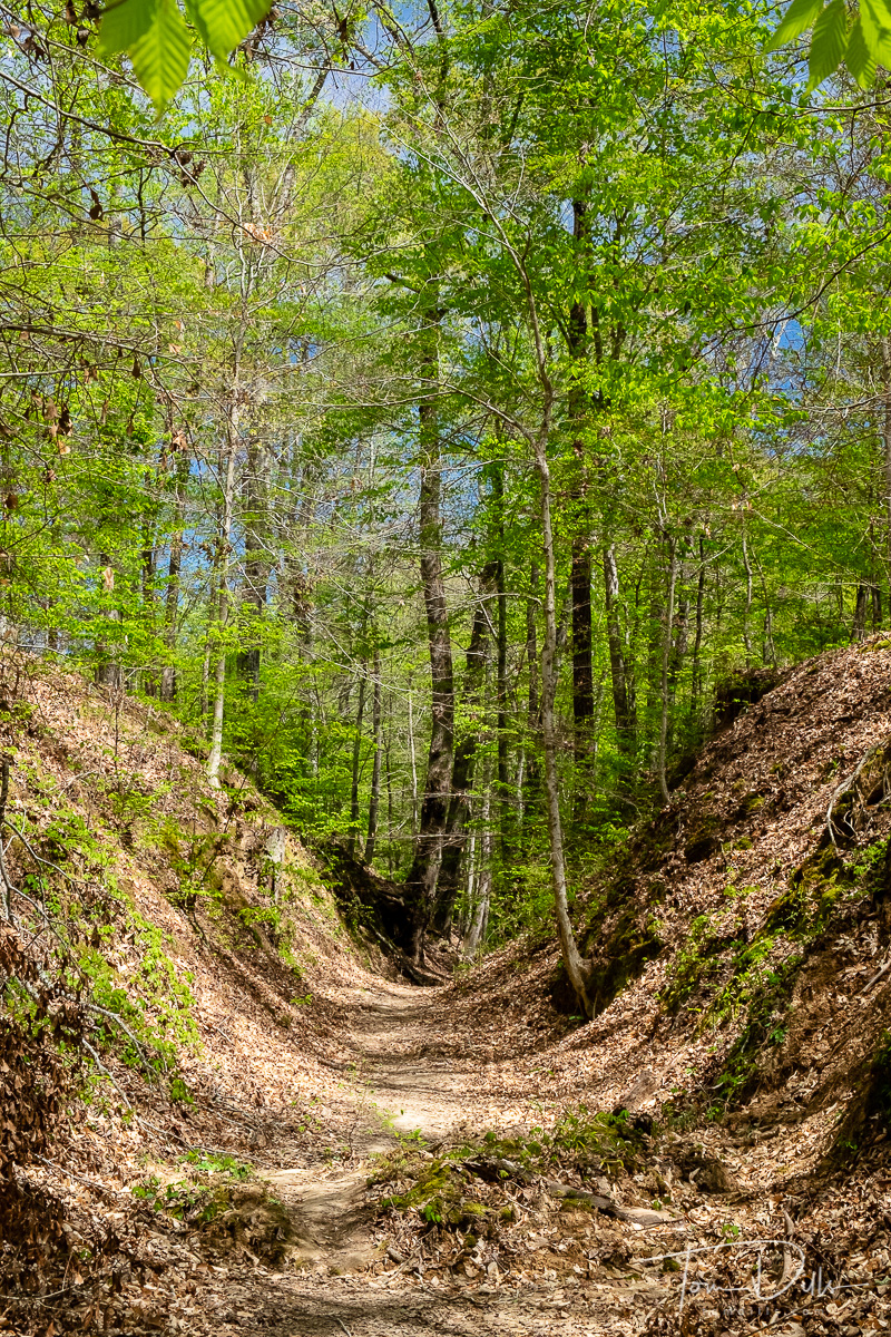 {quote}Sunken Trace{quote} portion of the old road along the Natchez Trace Parkway near Natchez, Tennessee