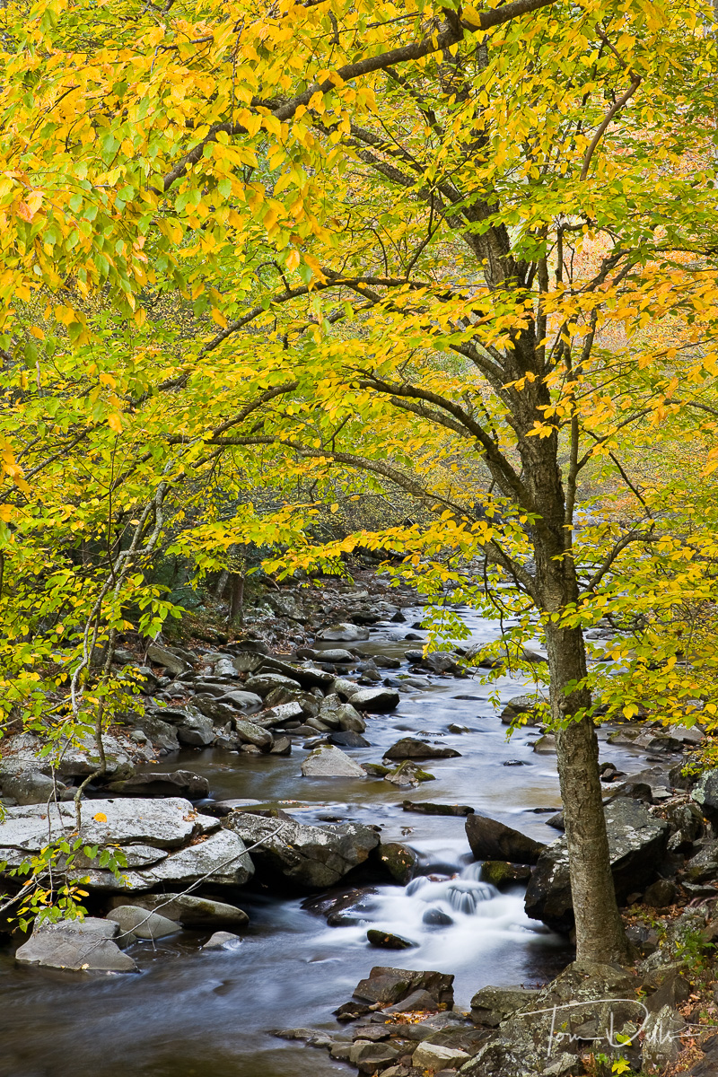 Little River from Little River Road, Great Smoky Mountains National Park