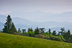 Rhododendron and mountain ridges from Round Bald, Roan Mountain, Tennessee
