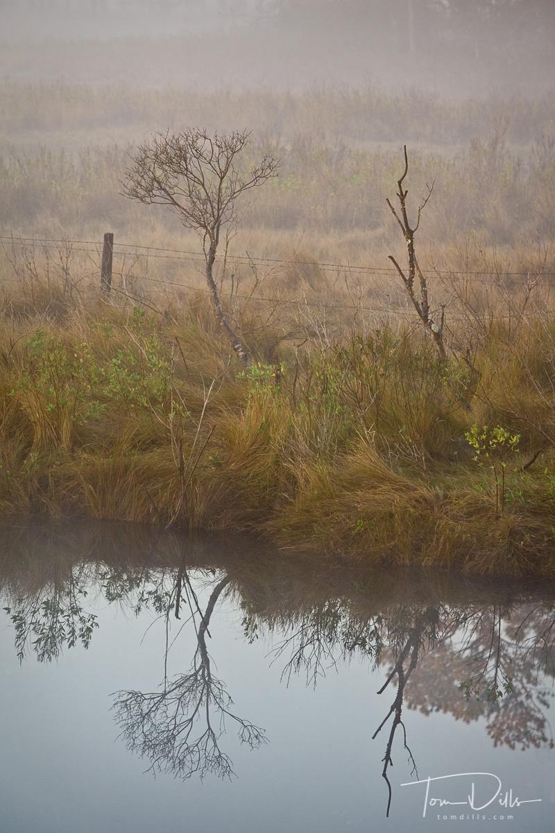 Morning fog at Chincoteague Island National Wildlife Refuge, Assateague Island, Virginia