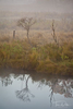 Morning fog at Chincoteague Island National Wildlife Refuge, Assateague Island, Virginia