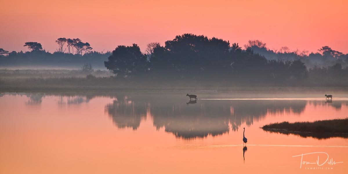 Sunrise at Swan Cove Pool, Chincoteague Island National Wildlife Refuge, Assateague Island, Virginia